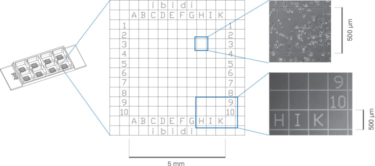 8 well带格子3.jpg